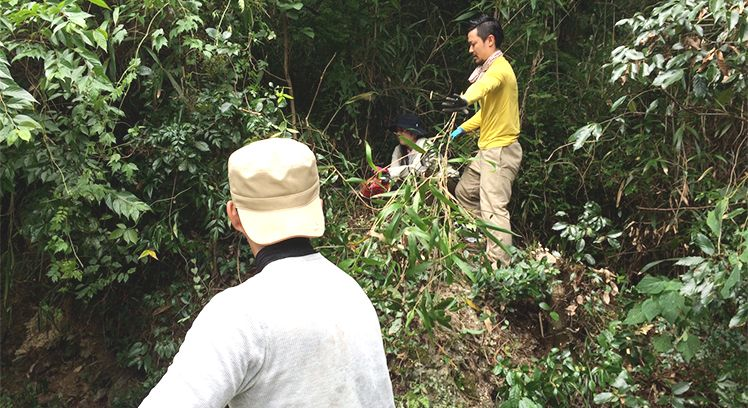 木の伐採の様子